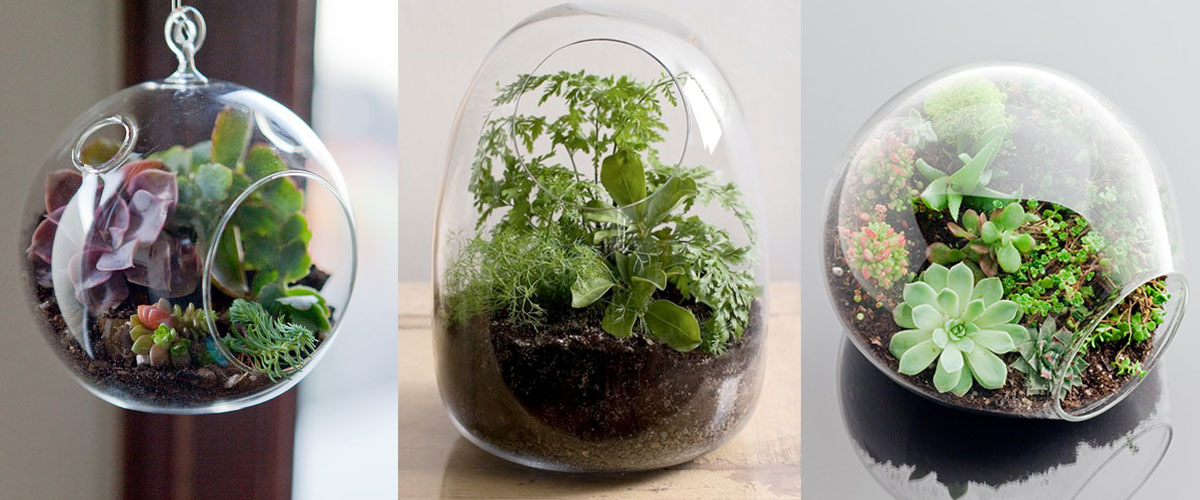 Terrariums Are Back How These Mini Gardens Can Help Boost Your