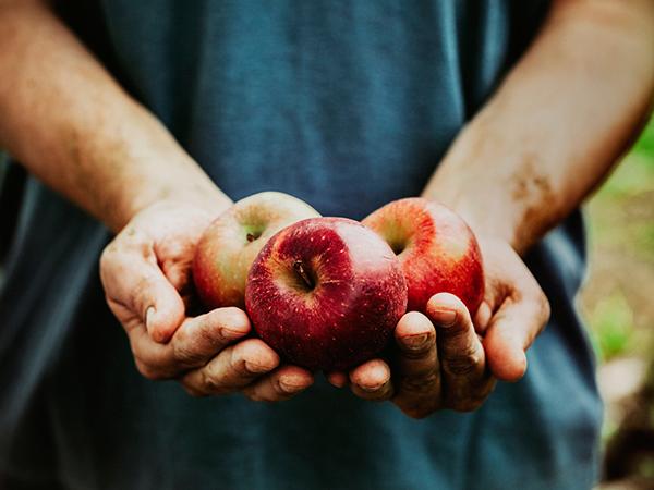 apples, farmer, foods good for digestion