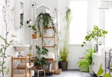 indoor plants, interior design, stress relieving