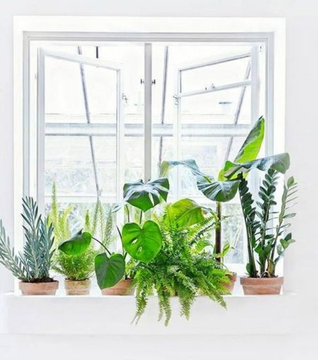 Feeling Stressed? Try These 5 Indoor Plants