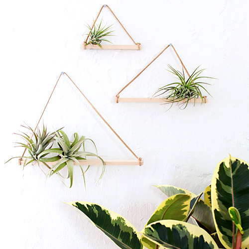 indoor plant reduce stress air plant DIY