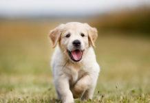 dog, travel, pets