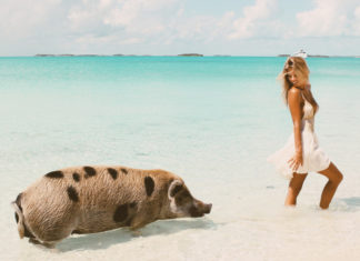 Big Major Cay, Staniel Cay, swim pigs, Tash Oakley, Bahamas, tropical island, travel, escape