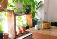 plants, indoor plants, houseplants, easy to care for plants