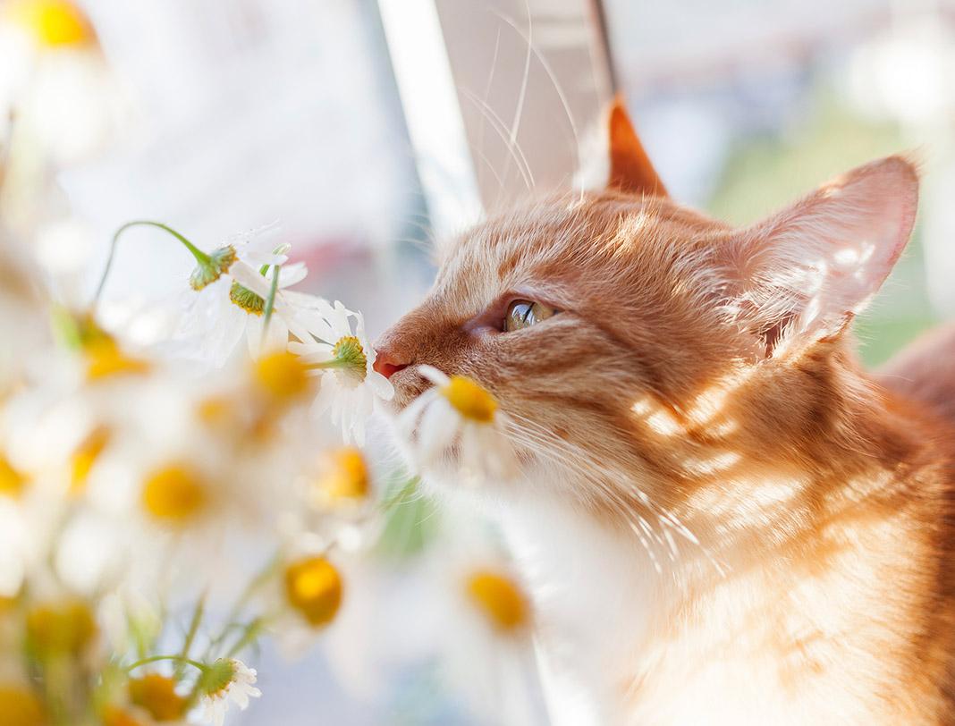 pet wellness, pet massage