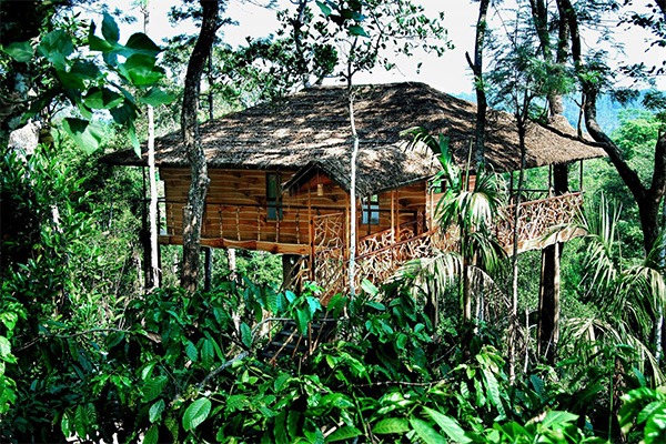 Tranquil Resort, tree house