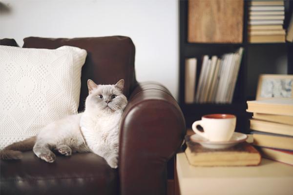 pet-friendly apartment, cats, living room