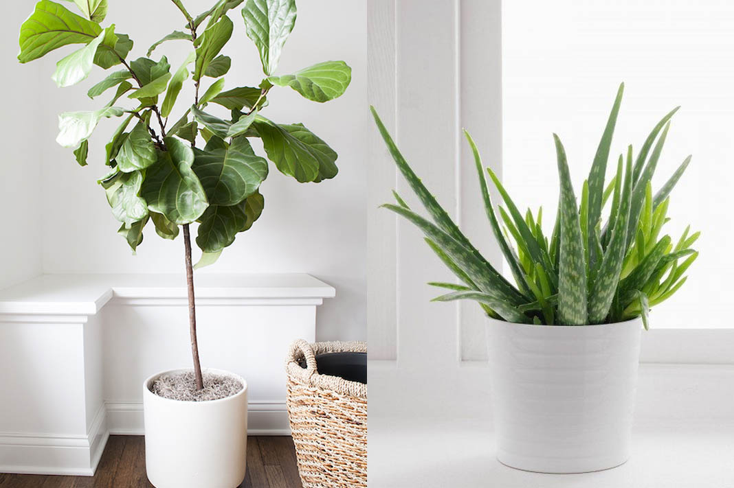 10 Indoor Plants That Are Literally Impossible To Kill