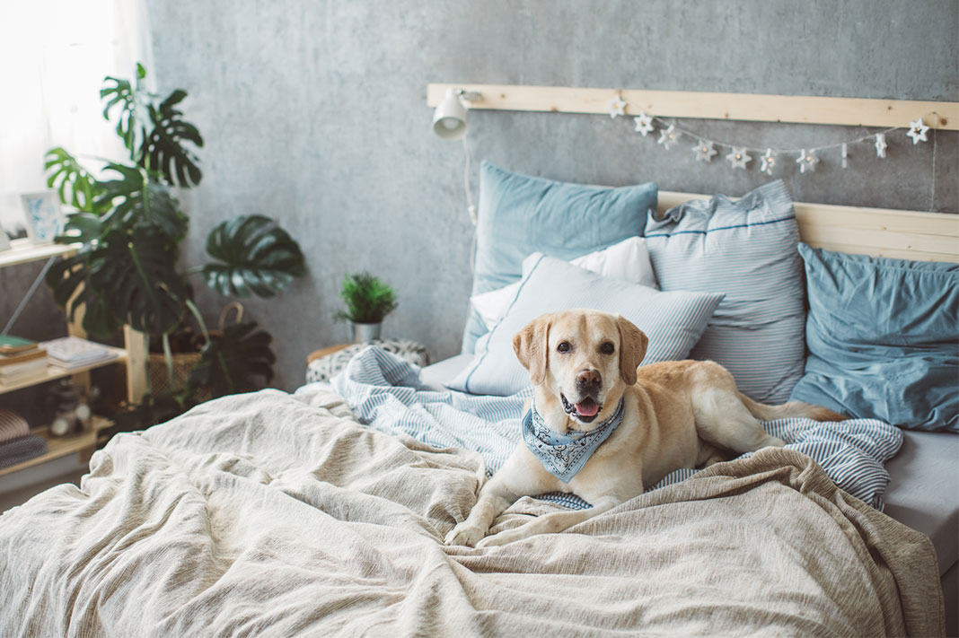 Here's How To Keep Your Pet Warm During The Colder Months