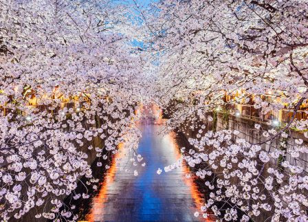 The 6 Best Places To See The Cherry Blossoms In Tokyo