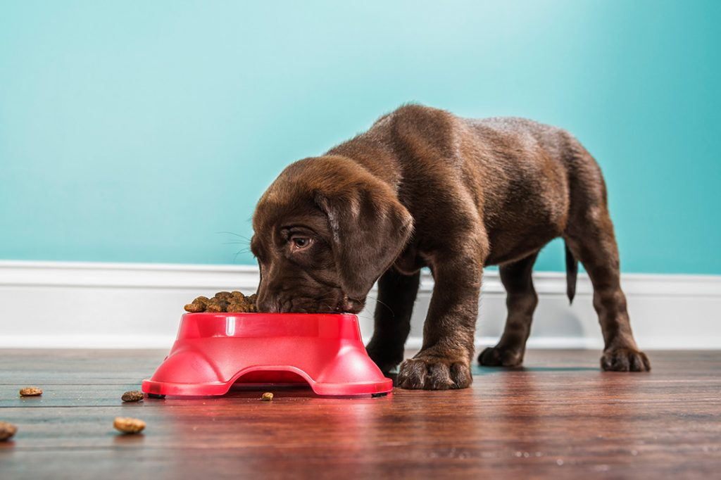 feed your pet healthy