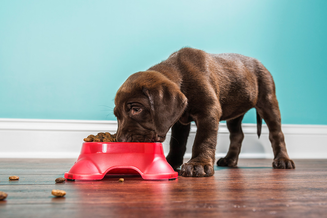 Pete Evans Dog Food