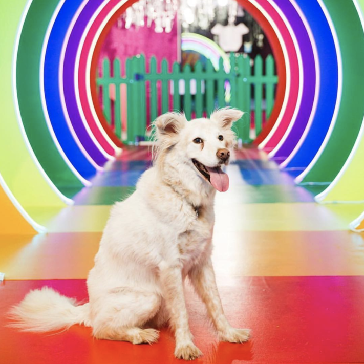 The Next Instagrammable Pop-Up Museum Takes NYC – And It's For Dogs