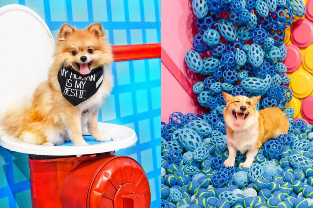 The Next Instagrammable Pop-Up Museum Takes NYC—And It's For Dogs