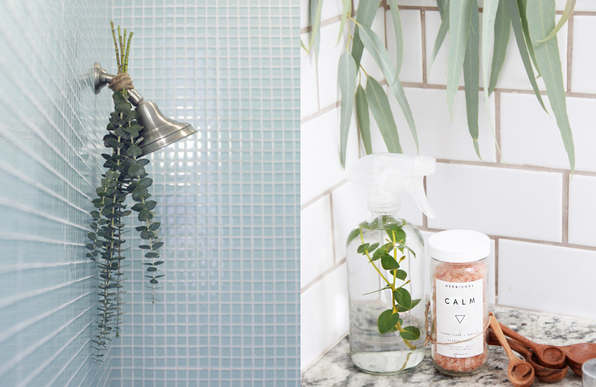 3 Easy Ways To Bring The Spa To Your Shower With Eucalyptus