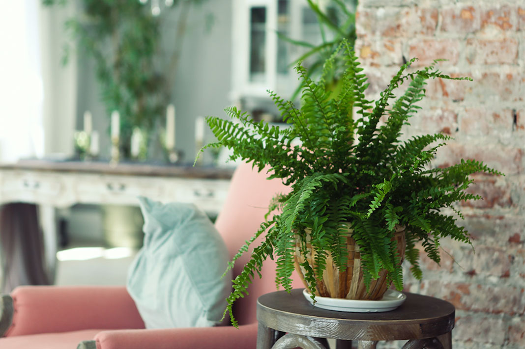 5 Of The Best Indoor House Plants To Help Fight A Cold